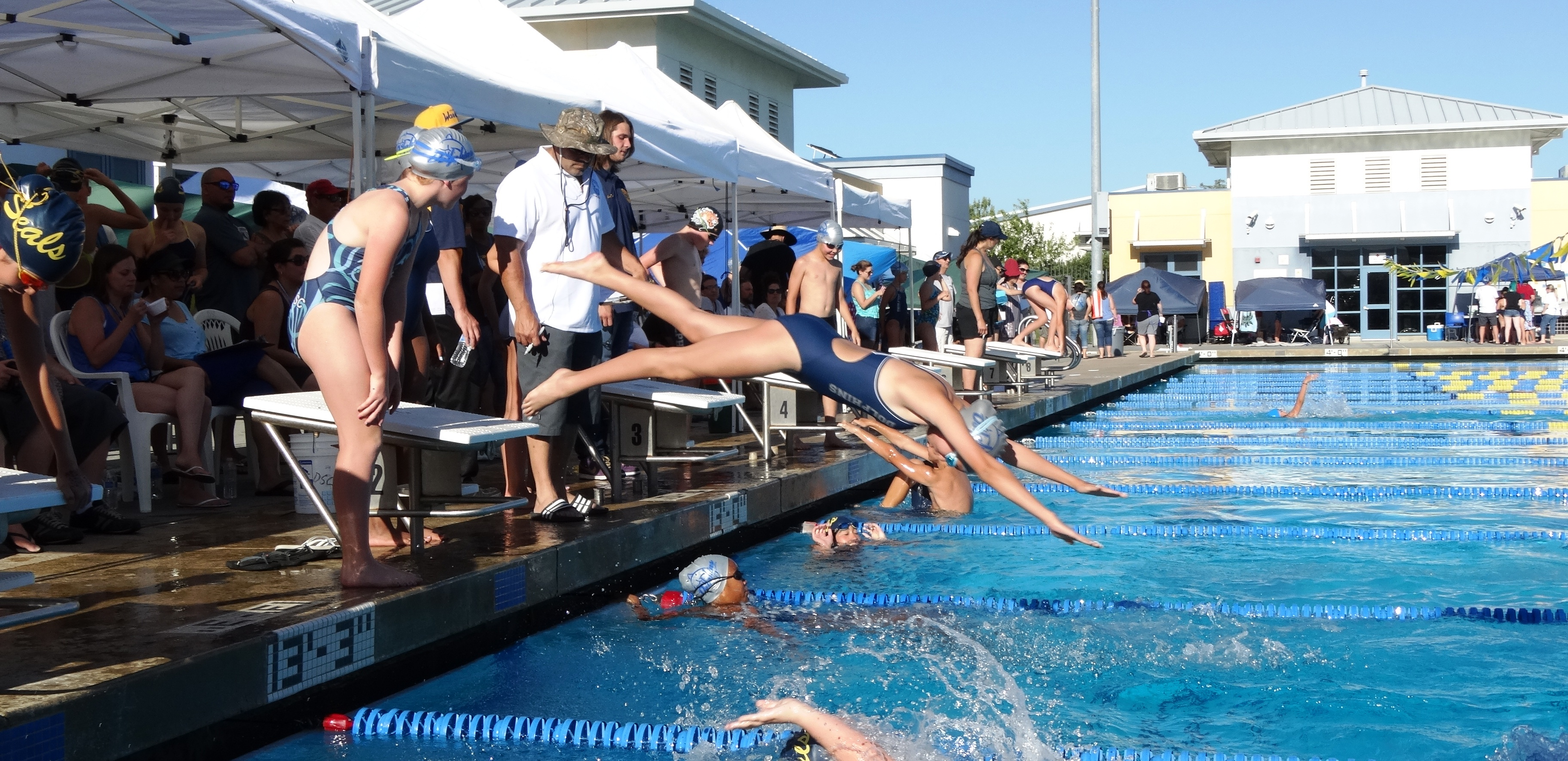 registration faqs brentwood dolphins swim club