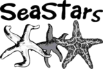 Powhatan Secondary Sea Stars Logo